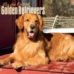 Golden-Retrievers-For-the-Love-of-2016-Deluxe-Multilingual-Edition-0