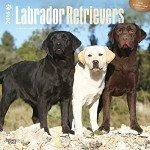 Labrador-Retrievers-2016-Wall-Calendar-0