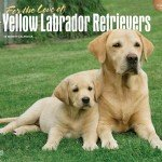 Labrador-Retrievers-Yellow-For-the-Love-of-2016-Deluxe-0