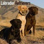 Labrador-Retriever-Mixed-Calendar-Only-Dog-Breed-Labrador-Retriever-Mixed-Calendar-2016-Wall-calendars-Dog-Calendars-Monthly-Wall-Calendar-by-Avonside-0