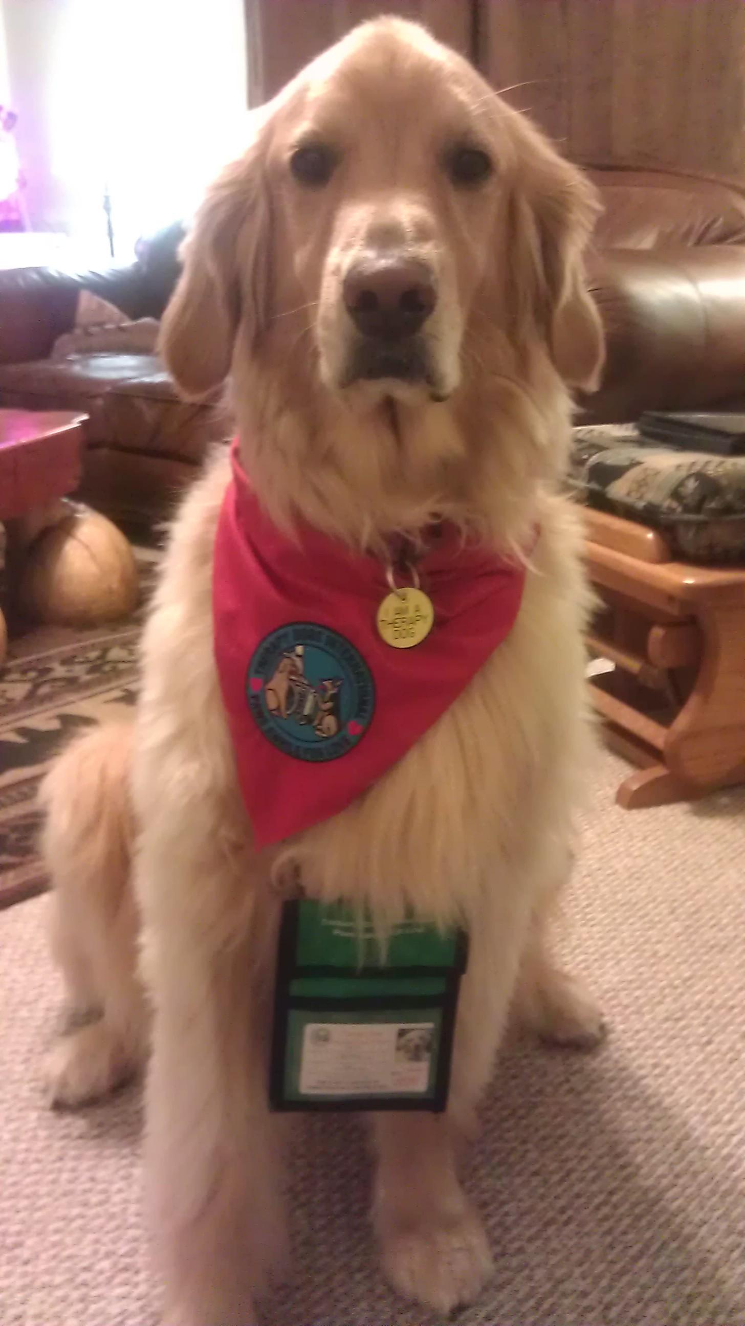 Therapy Dog Training Va